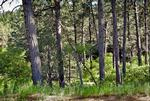 246 Cliffs Edge Drive #10, 0.52 acres; $164,000