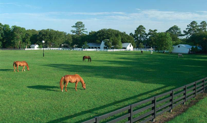 The Equestrian Center at Brays Island Plantation features 60 miles of trails and hundreds of acres of paddocks.