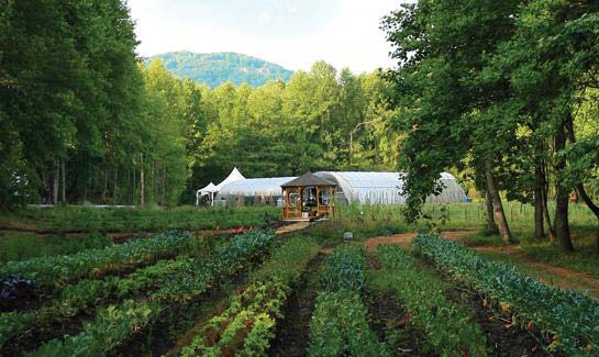 The Cliffs' Organic Farm