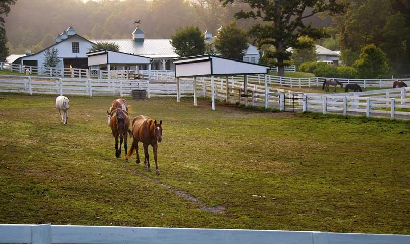 The full-service Equestrian Center at The Greenbrier Sporting Club serves as the base for the 10 miles of rugged riding trails throughout the surrounding mountains