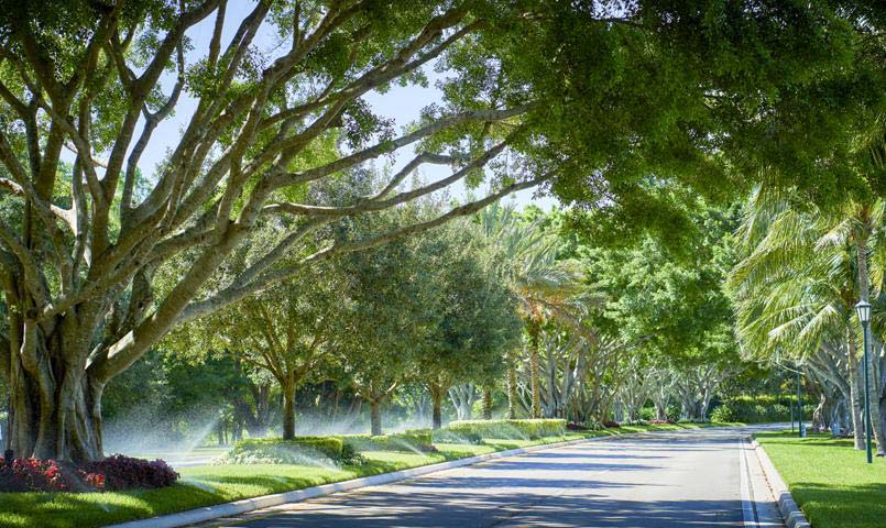 Tree-lined street at The Club at Ibis