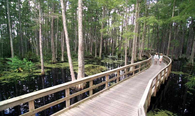 An observation boardwalk winds through the 38-acre nature preserve