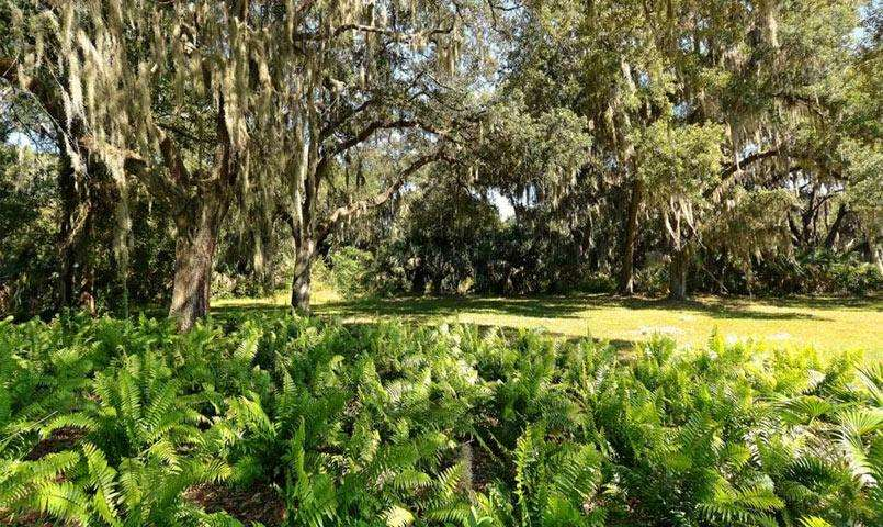 Oak trees at Silverleaf community in Parrish, FL