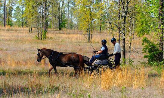 Carriage driving at Three Runs Plantation