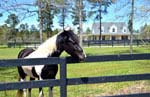 Aiken, South Carolina Equestrian Community