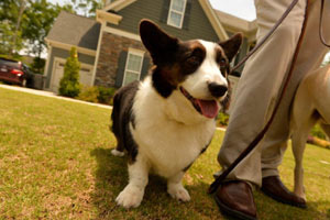 Return to the 12 Oaks Feature Page