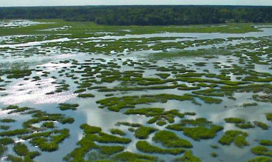 Spring Island is a rich amalgamation of habitats, thanks to its unique coastal topography