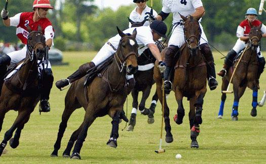 The Heritage Cup at the Sarasota Polo Club within Lakewood Ranch